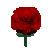EverQuest Rose.jpg
